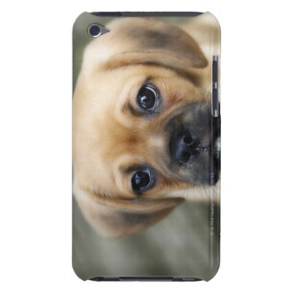Pugalier Puppy Looking at Camera iPod Case-Mate Case