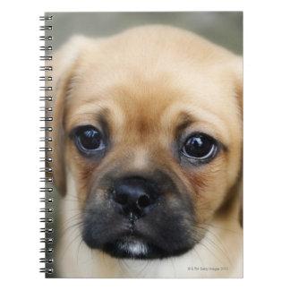 Pugalier Puppy Looking at Camera Notebook