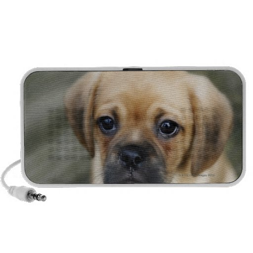 Pugalier Puppy Looking at Camera PC Speakers