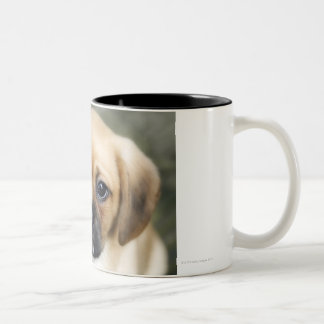 Pugalier Puppy Looking at Camera Two-Tone Coffee Mug