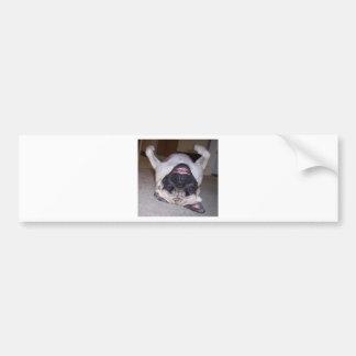 Puggin Around Bumper Sticker