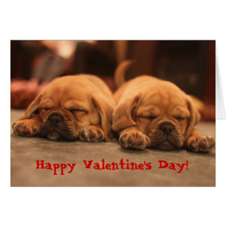 Puggle Valentine's Day Greeting Card