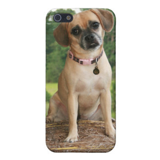 Puggly & Confused iPhone 5/5S Case