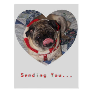 Pugs And Kisses Valentine's Day Postcard