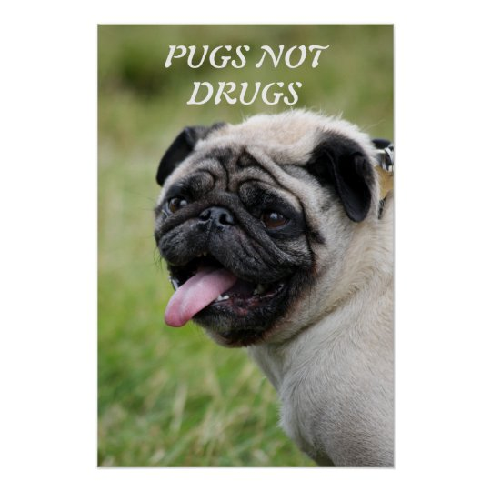 Pugs not Drugs cute pug photo poster, print