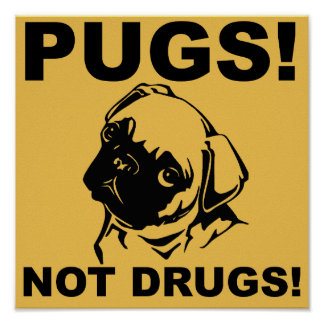 Pugs Not Drugs Funny Poster Sign Sayings