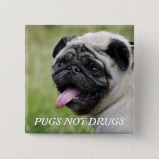Pugs not drugs, pug dog cute photo button, pin