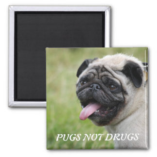 Pugs not drugs, pug dog cute photo magnet