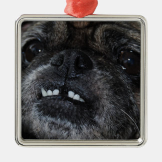 Pugs Pearly White Teeth  Ornament