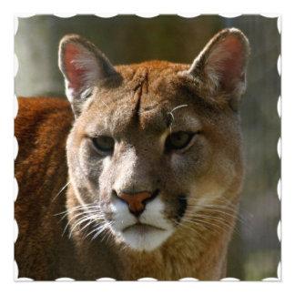 Puma Cat Invitation
