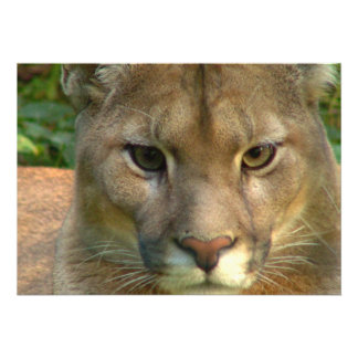 Puma Mountain Cat Invitation