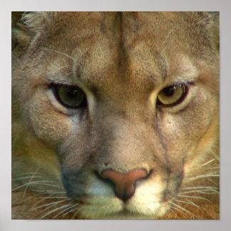 Puma Mountain Cat Poster Print
