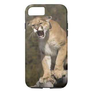 Puma or mountain lion, puma concolor, Captive - iPhone 8/7 Case