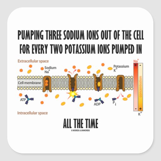 Pumping Three Sodium Ions Out Of Cell (Na-K Pump) Square Stickers