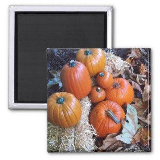 Pumpkin decoration magnet