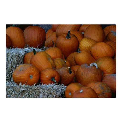 Pumpkin Display Print