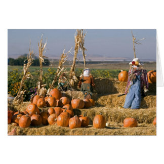 Pumpkin display with hay bales and scarecrows card