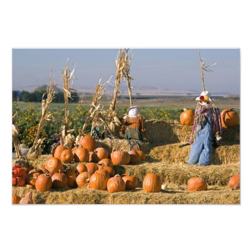 Pumpkin display with hay bales and scarecrows photographic print