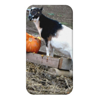 Pumpkin Eater Cover For iPhone 4