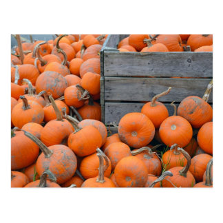Pumpkin farm print postcard