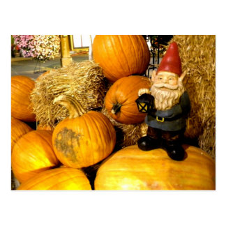 Pumpkin Gnome I Postcard