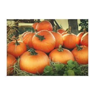 Pumpkin Harvest Stretched Canvas Print