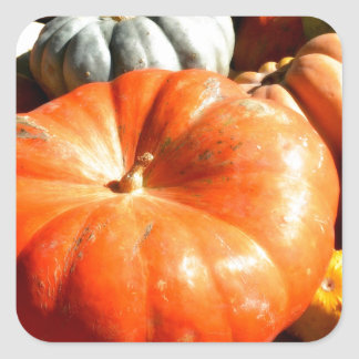 Pumpkin harvest square sticker