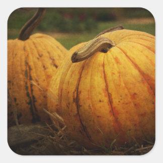 Pumpkin Harvest Stickers