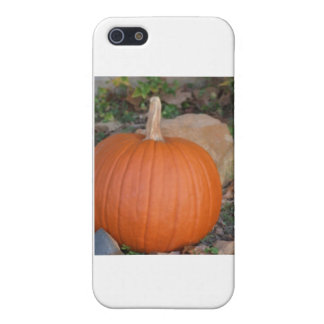 Pumpkin Cases For iPhone 5