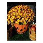 Pumpkin Mum Postcard