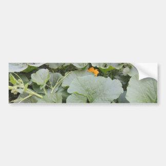 Pumpkin patch bumper sticker