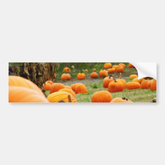 Pumpkin Patch Bumper Sticker
