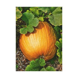 Pumpkin Patch Stretched Canvas Prints