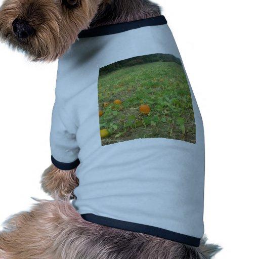 Pumpkin patch pet clothing