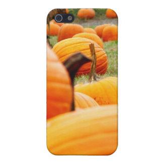 Pumpkin Patch iPhone 5/5S Cover