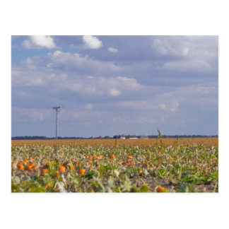 pumpkin patch landscape postcard