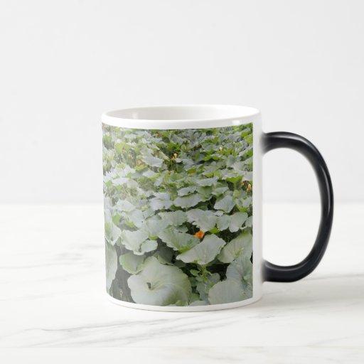 Pumpkin patch mugs