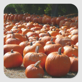 Pumpkin Patch Square Sticker