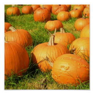 pumpkin plethora poster