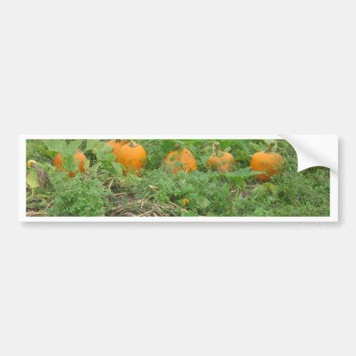 Pumpkins all in a row bumper sticker