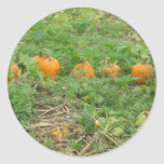 Pumpkins all in a row round stickers