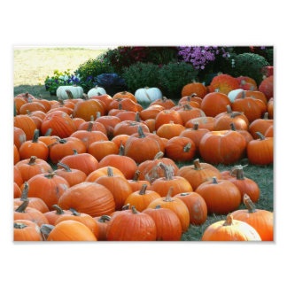 Pumpkins and Mums Autumn Harvest Photography Photographic Print