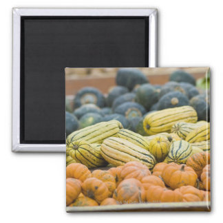 Pumpkins and squash on display at farmer's square magnet