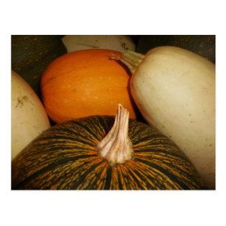Pumpkins and Squashes Postcard