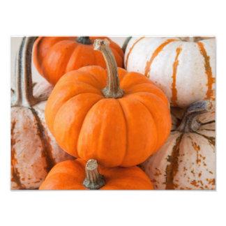 Pumpkins Art Photo