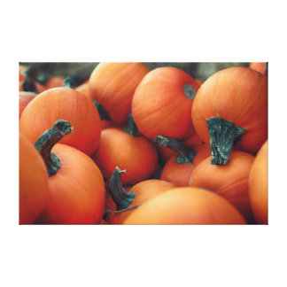 Pumpkins Gallery Wrapped Canvas