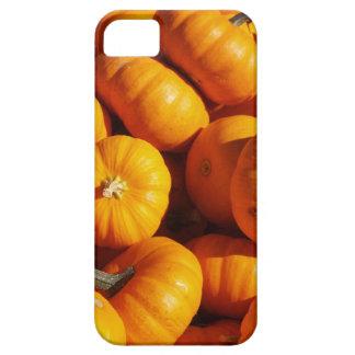 Pumpkins iPhone 5 Cases