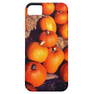 Pumpkins Case For The iPhone 5