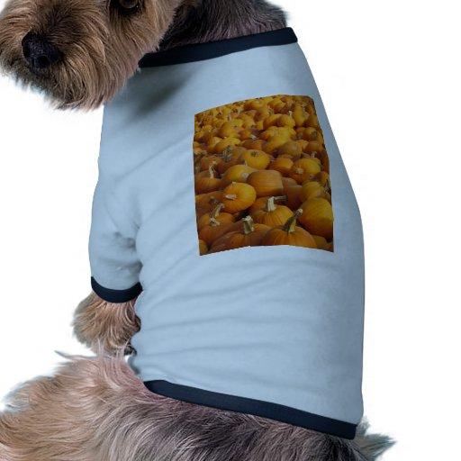 Pumpkins Doggie Tee