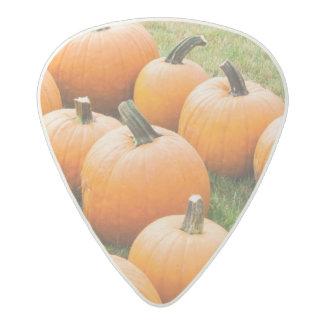 Pumpkins for Sale at a Farmer's Market Acetal Guitar Pick